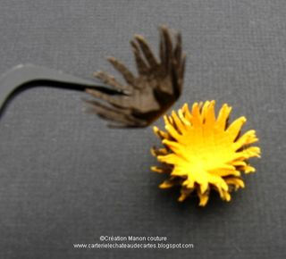 Kasimodo-Equinacea(15)