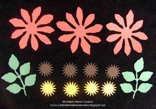 Kasimodo-Equinacea(2)
